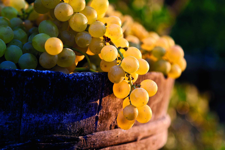 Ischia e i vini DOC: una lunga storia d'amore